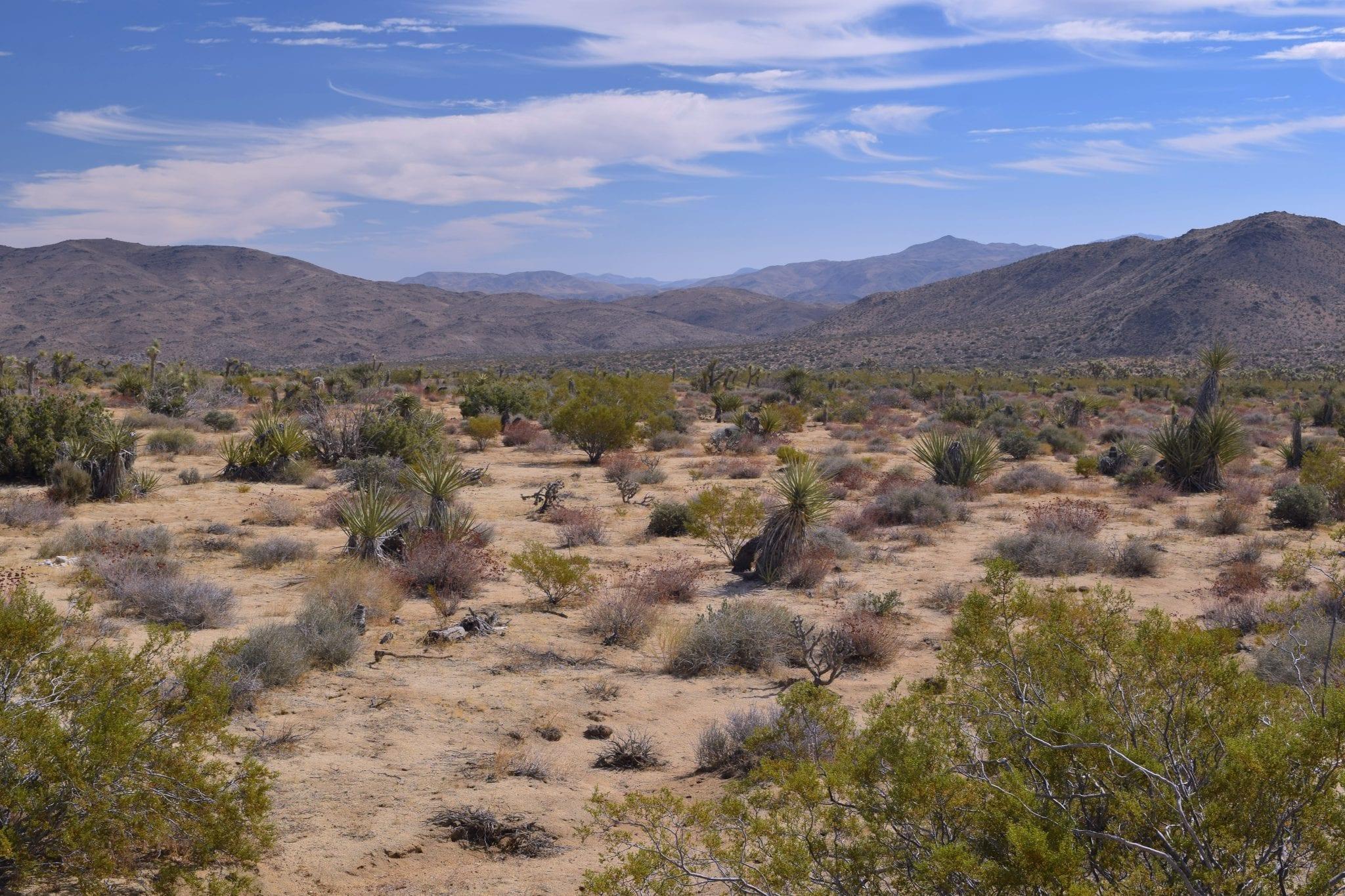 California desert mountain cactus