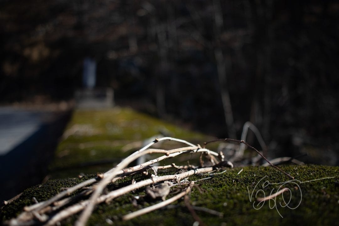 dead and dried sticks lay on a mossy bridge shoulder near savage river state forest in Maryland in early fall