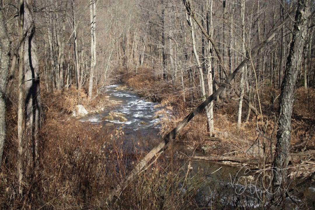 A narrow creek rushes through barren trees in Savage River State Forest in early winter