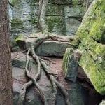 Bilger's Roots in Bilger's Rocks