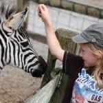 Girl pets a zebra at Living Treasures